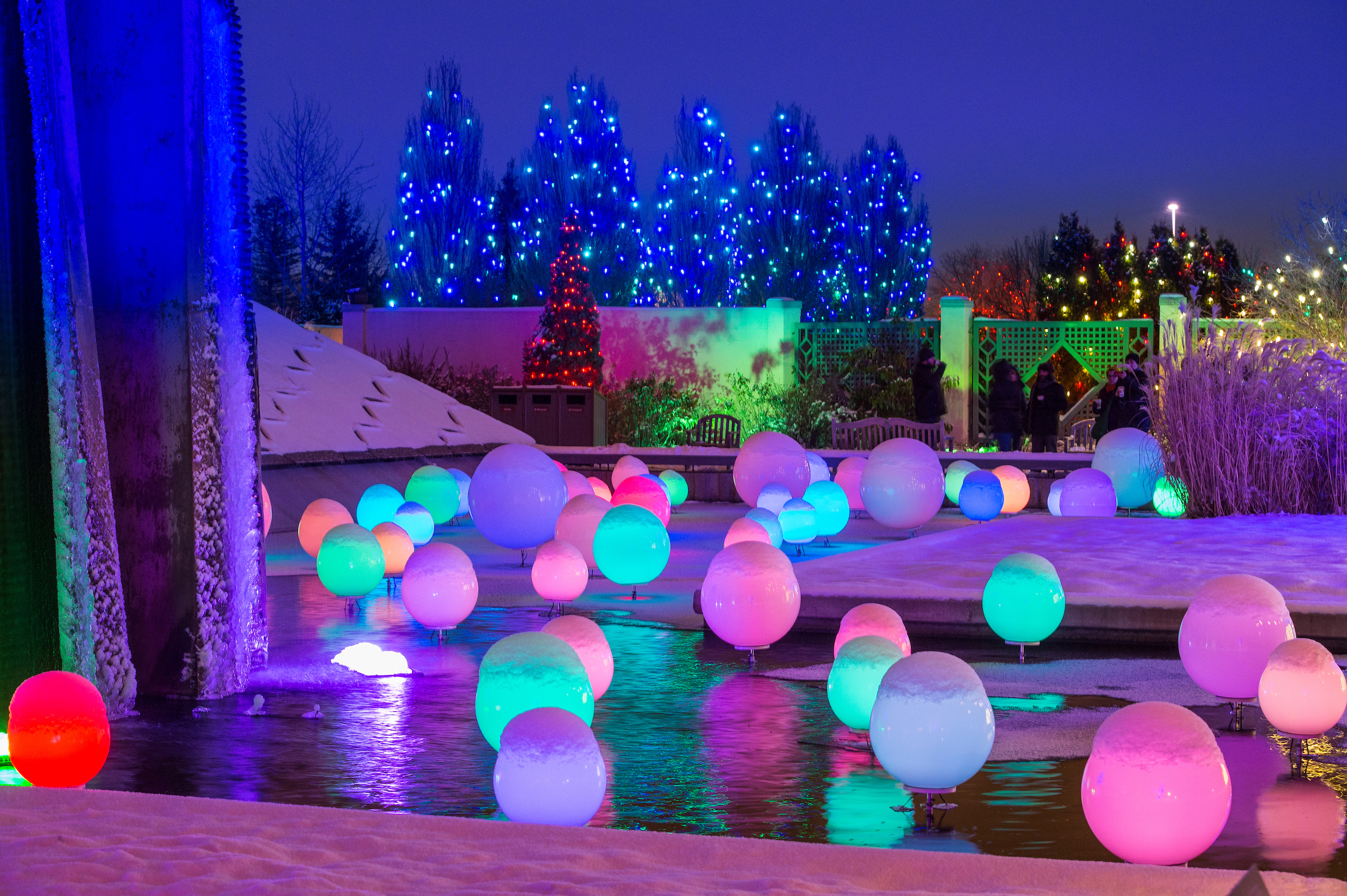 Night At Blossoms Of Light Colorado Business Committee